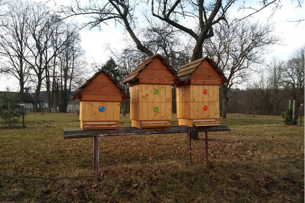 How does a beehive work?