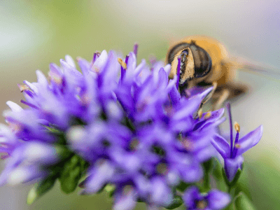 everything you need to know about beekeeping
