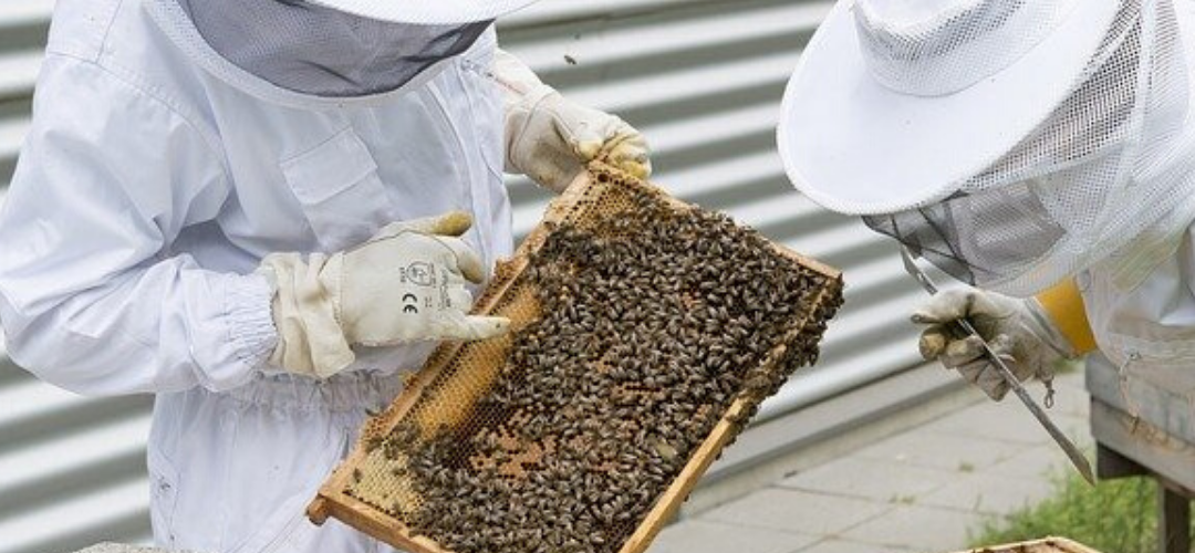 Bee Suits – Find the perfect Bee Suit for you!