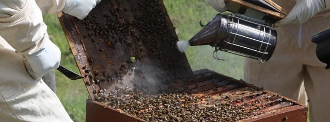 best bee smoker