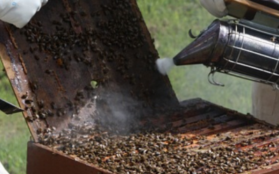 Bee Smoker – Why you Really Need one?