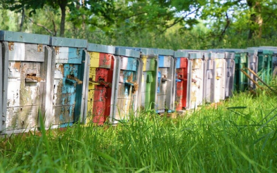 Buying a Beehive – Awesome tips to buy your own beehive