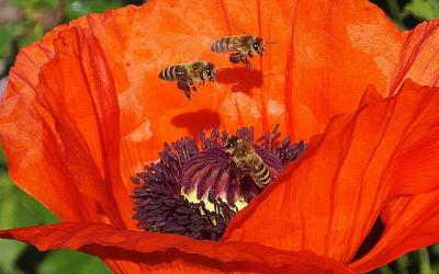 Creating aHoney Bee Habitat