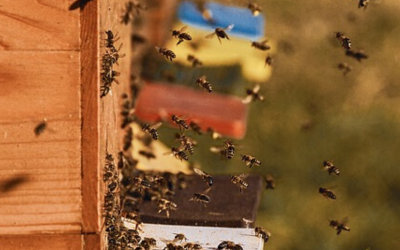 How many bees are in a hive?