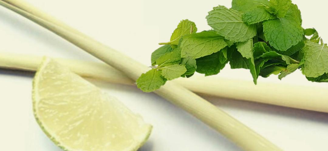 lemongrass oil and spearmint oil
