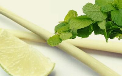 Lemongrass Oil and Spearmint Oil for Bees