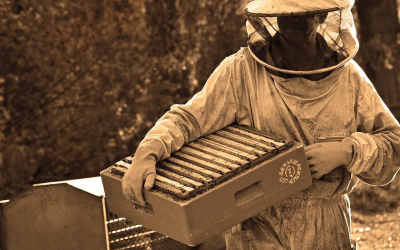 Beehive Protection – Protect your bees from pests