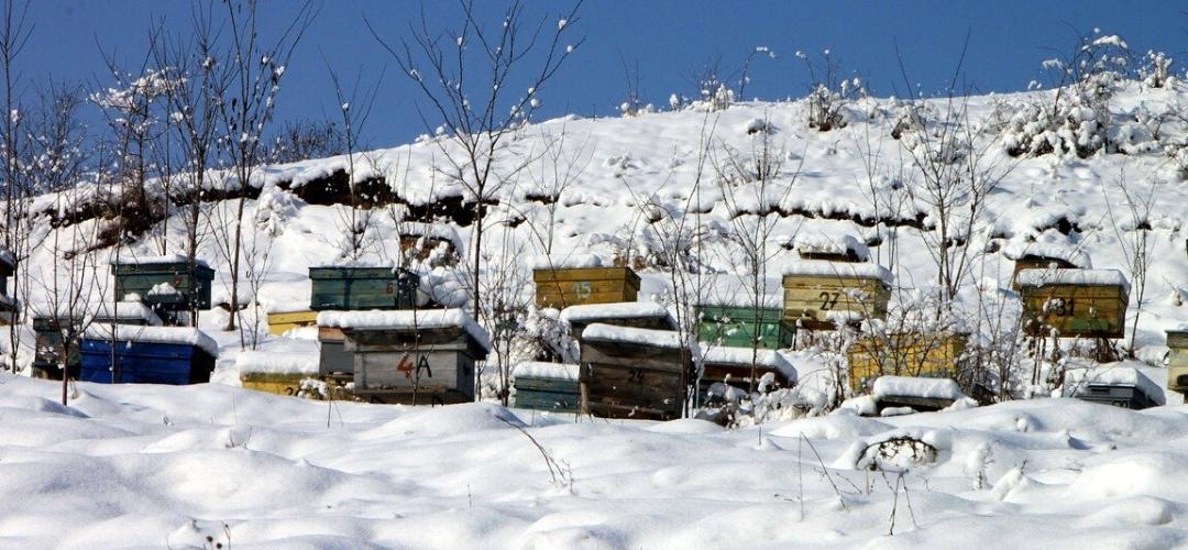 winterizing beehives