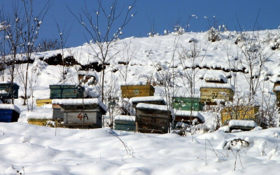 Winterizing Bees – How to keep bees alive in winter