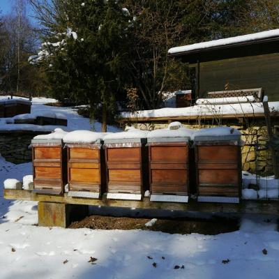winterizing bees