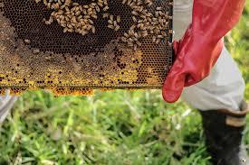 best honey uncapping tool