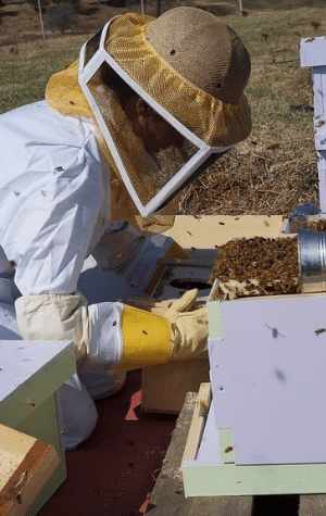 how to start a honey bee farm