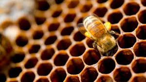 beehive cleaning