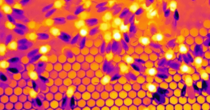 Inside a beehive - Thermal Imaging