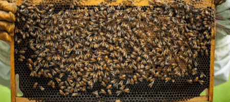 Budget Beekeeping – It Makes Cents!
