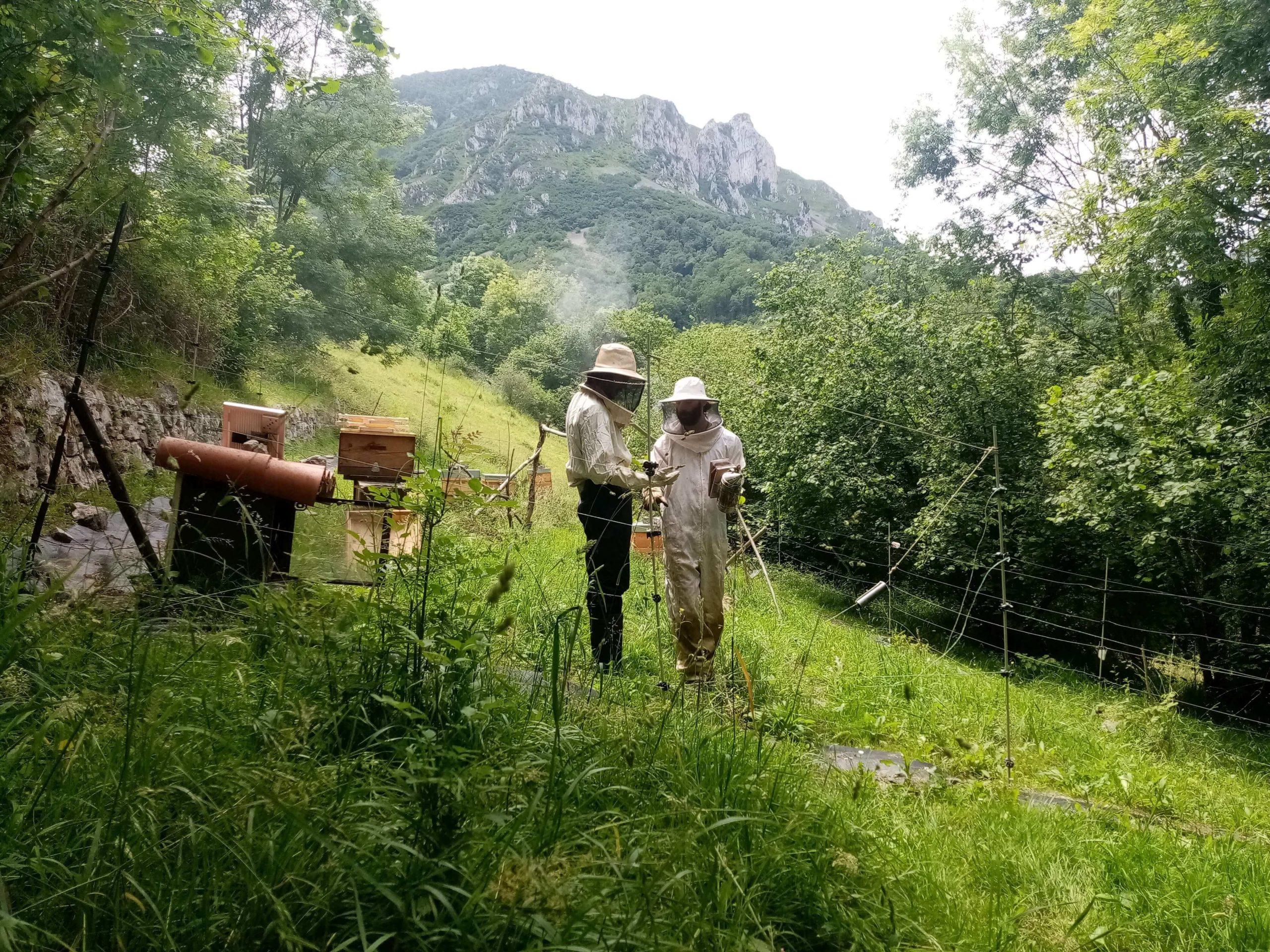 Budget beekeeping