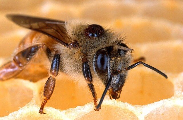 treatment of varroa mites