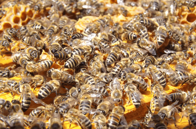 How Much Does a Bee Colony Cost?