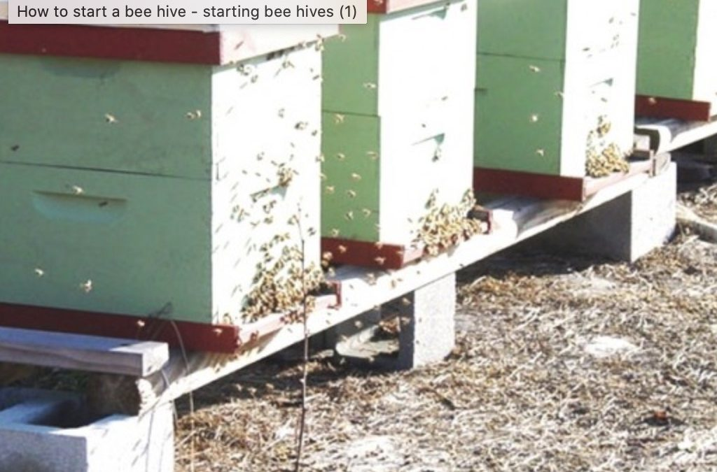 How Does A Beehive Start?
