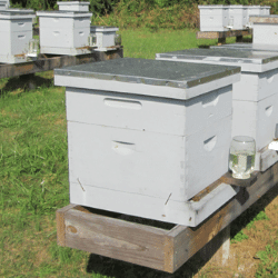 Best Beehive Feeder – Helpful Advice and Tips for Beekeepers