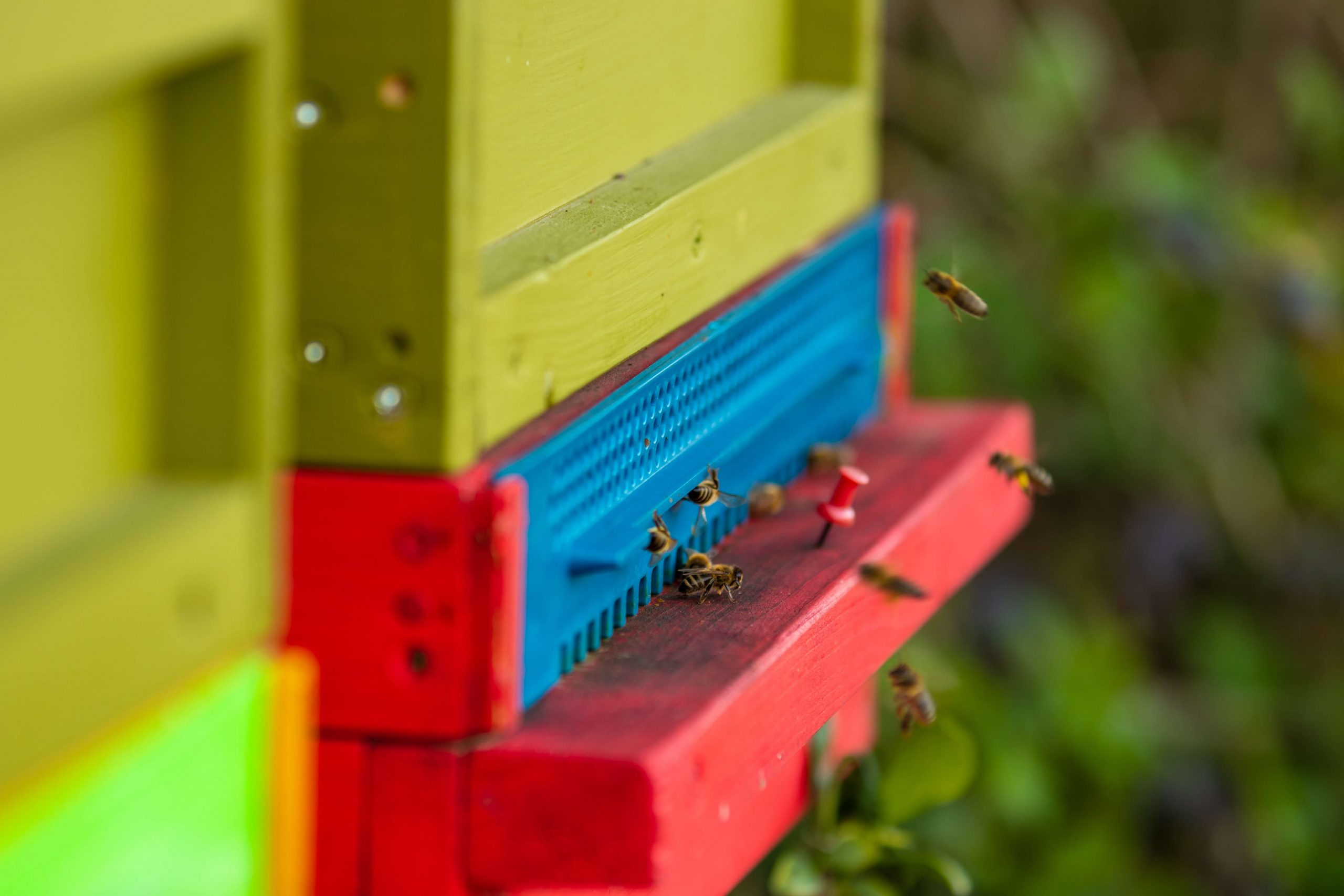 how to paint a beehive