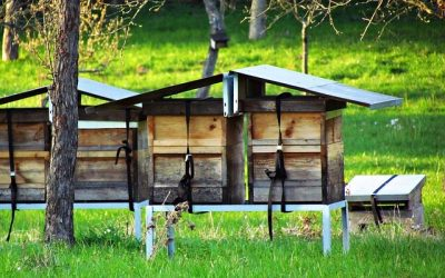Best Beehive setup for your own ultimate apiary at home!