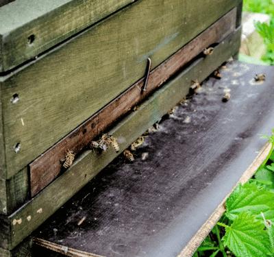 how to make a honey bee box