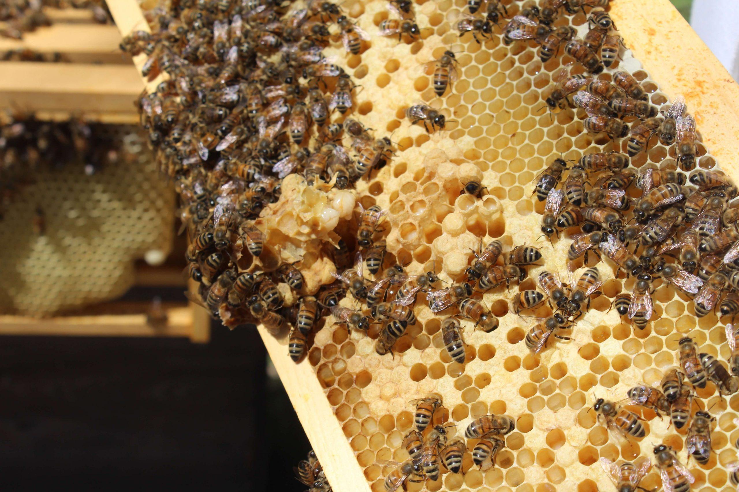 how do bees make money