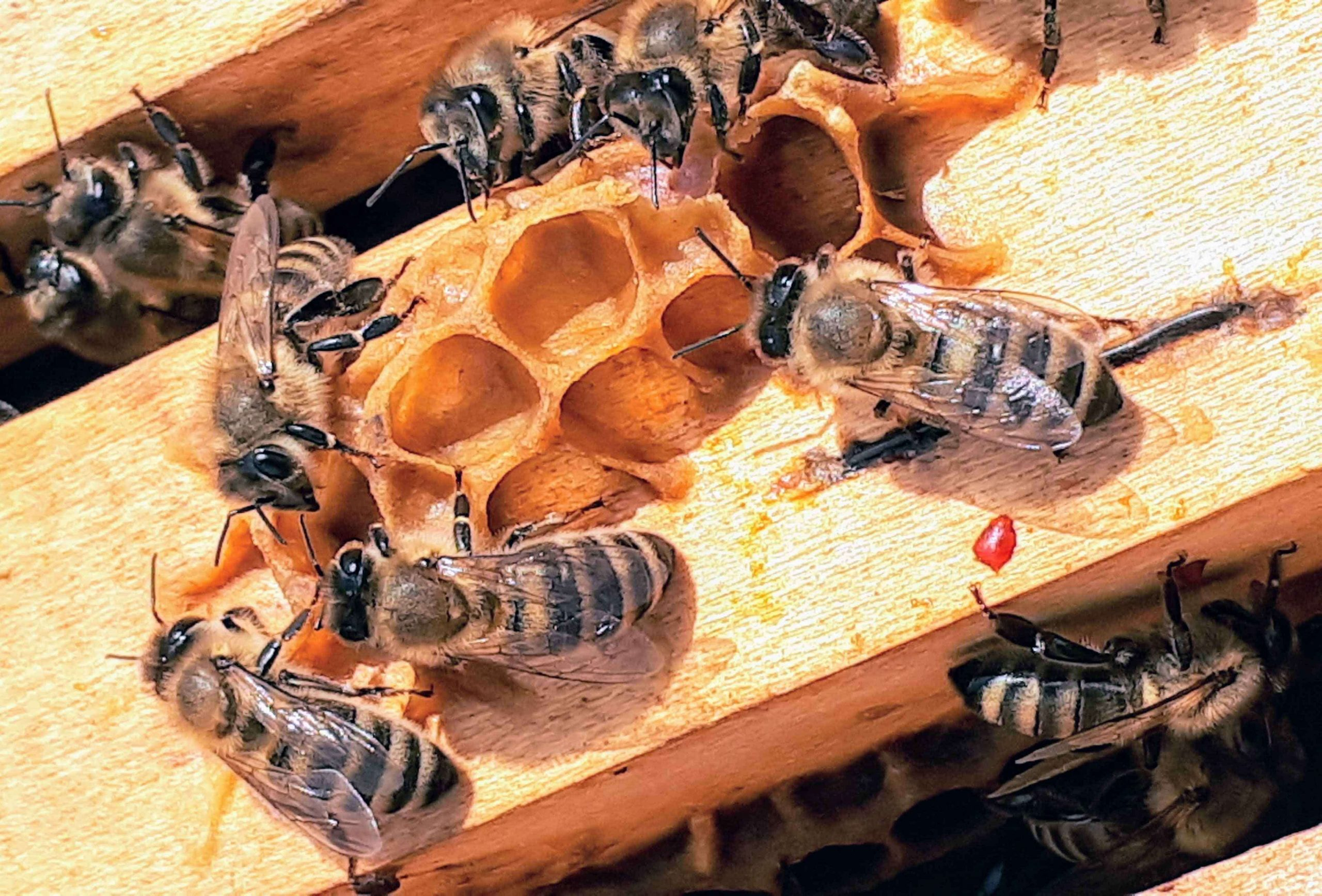 how does a beehive start