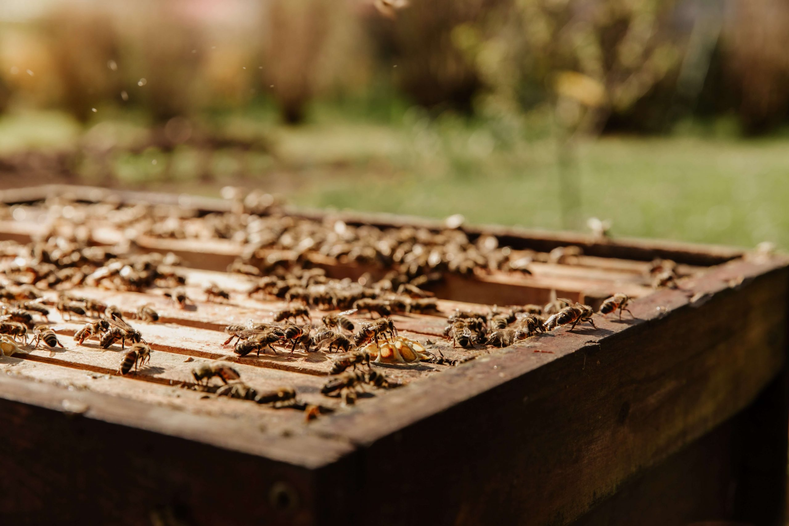 how much does a bee colony cost