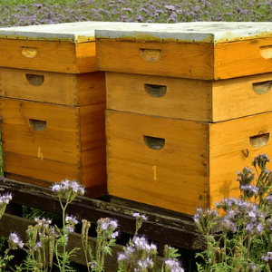 buying a beehive