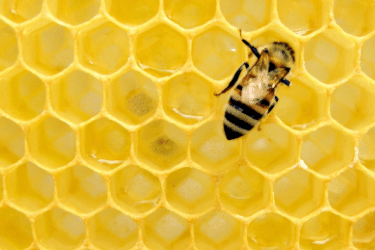 Does Honey Go Bad? Or does it stay fresh forever?